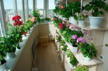 Цветы для балкона западная сторона